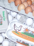Eier 10 St.