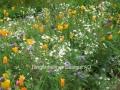 Sommerblumenmischung Elfengarten